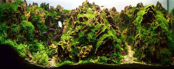 Bitkili Akvaryum Tasarımı